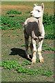 TL2850 : Friendly alpaca by Tiger