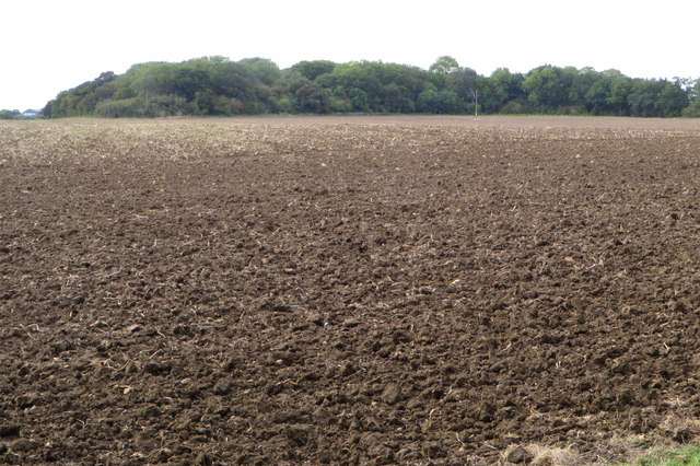 Round Wood across a newly ploughed field
