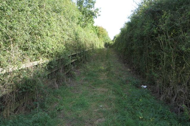 Bridleway towards Temple Wood