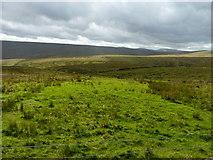 NY8135 : Moorland farmland by James Allan