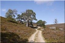 NO1795 : Bealach Dearg road by Richard Webb