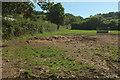SX8074 : Field near Hill Farm by Derek Harper