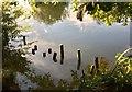 SU5096 : Piles at the riverbank by Alan Hughes