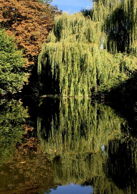 Tree tranquility