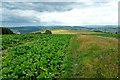 SO2867 : Offa's Dyke Path below Hawthorn Hill by Jeff Buck