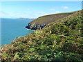 SN0542 : Bracken on the cliffs of Trwyn y Bwa by Richard Law