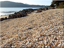 NX8354 : Cockle shell beach at Roughfirth by Andrew Curtis