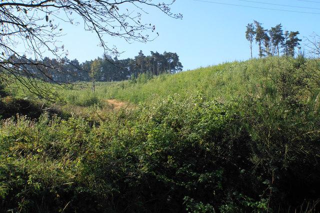 Wandon Spurs Plantation