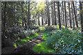 SK0213 : Bridleway on Rawnsley Hills by Bill Boaden