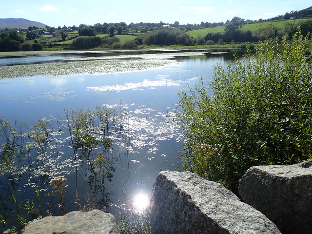 Lily pads on Camlough Lake