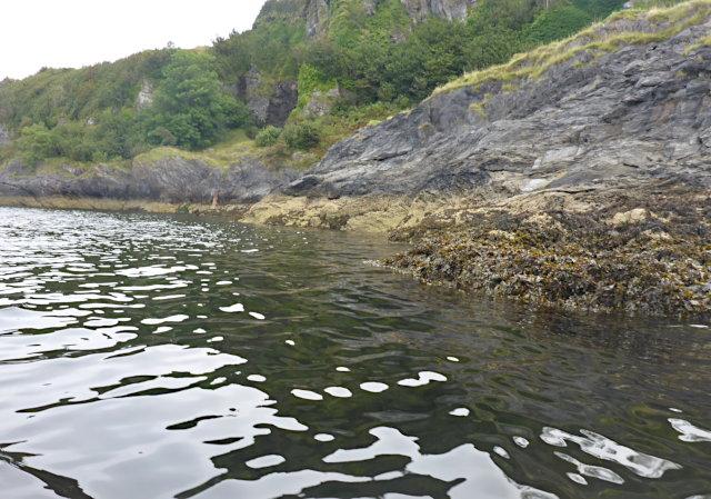 Seaweed coast