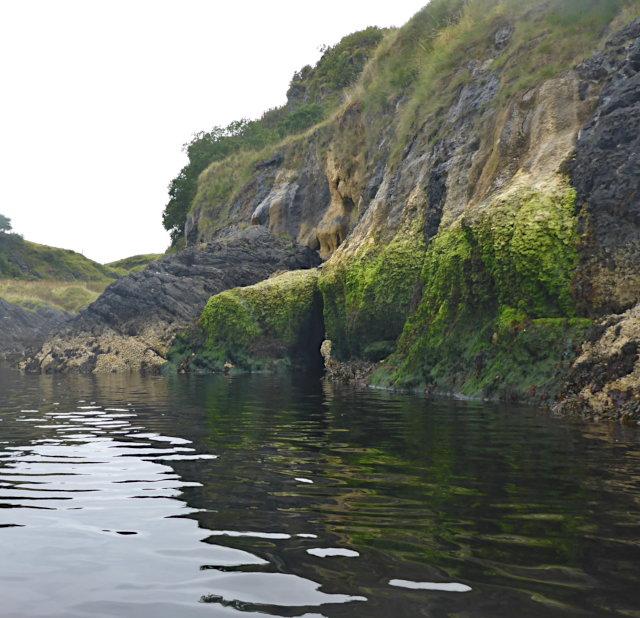 Seaweed on tufa