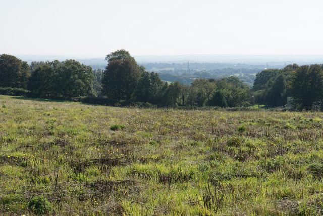 Field above Gentleshaw