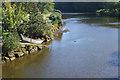 NZ8909 : River Esk, Ruswarp by Stephen McKay