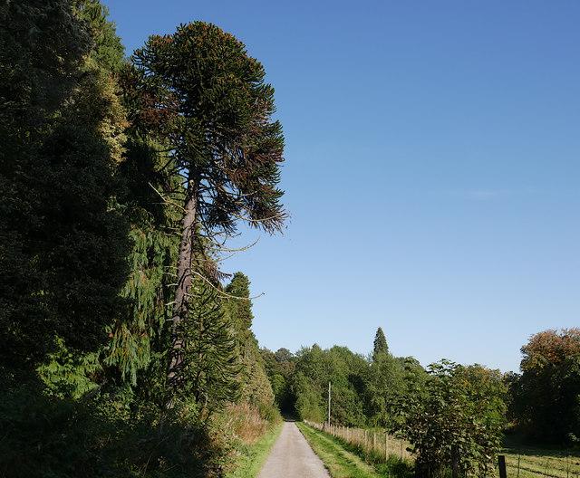 Driveway, Rosehaugh