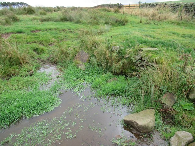 Wee silted-up cundy on Harelaw Moor near Westruther in the Scottish Borders