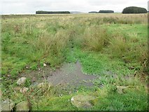 NT6549 : Drainage away from wee silted-up cundy near Westruther in the Scottish Borders by ian shiell
