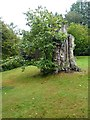 TQ4124 : Tree trunk in Sheffield Park Gardens by Oliver Dixon