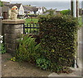 SS9769 : Cool lion, Llanmaes Road, Llantwit Major by Jaggery