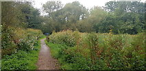 SP0979 : Riverside Path in Shire Country Park by Paul Collins