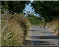 TM4048 : Gedgrave Road heading towards Orford by Mat Fascione