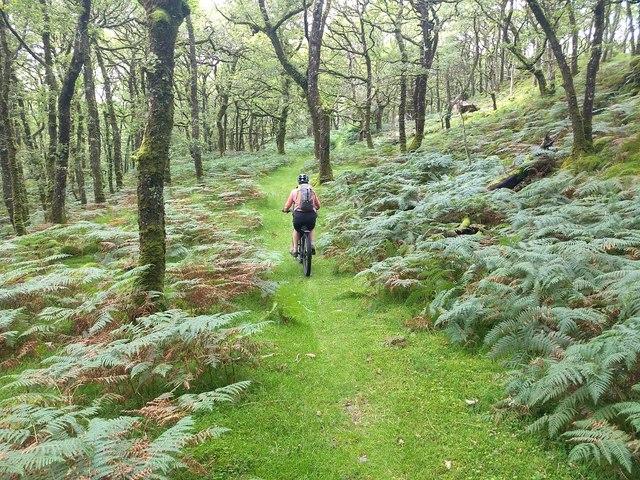 Green path above Ceunant Llennyrch