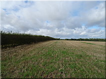 SP6134 : Stubble field and hedgerow near Tibbets Farm by JThomas