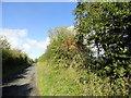 NZ1148 : Autumn hedge along the lane by Robert Graham