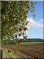 SP0964 : Hawthorn berries in a hedge near Castle Farm by Rod Allday
