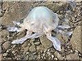 SS4496 : Stranded jellyfish by Alan Hughes