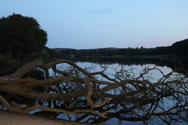 Fallen Tree at Loch Ken
