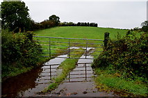 H6056 : Muddy entrance to field, Sess by Kenneth  Allen
