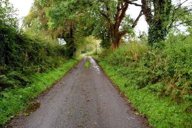Wet along Sess Road