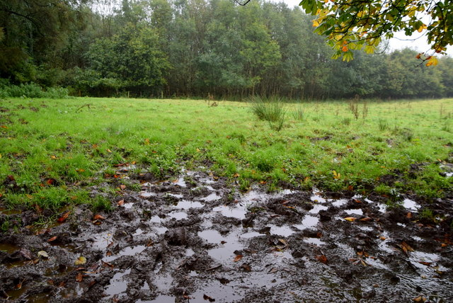 Water-logged field, Sess