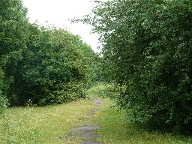 Path, Roundshaw Downs
