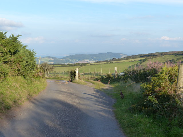 Cattle grid on the road to Yarner Farm