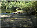NT5216 : Remains  of  old  weir  on  River  Teviot  (2) by Martin Dawes