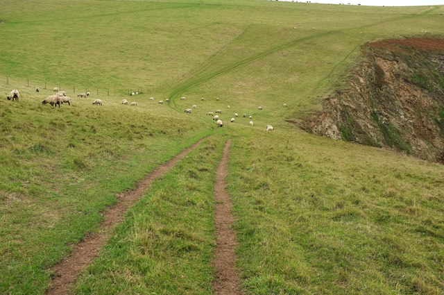 Sheep above Fernycombe Beach