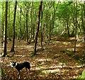 TQ5608 : Wilmington Wood by Simon Carey