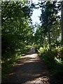 TQ5607 : Track, Abbot's Wood by Simon Carey