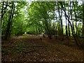 TQ5607 : Gate Wood by Simon Carey