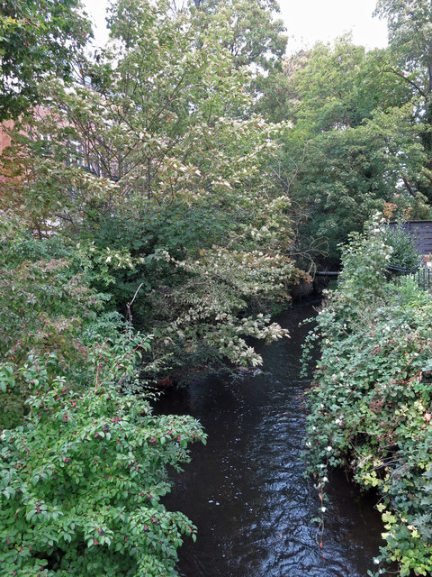 The River Colne, just above its confluence with the River Thames