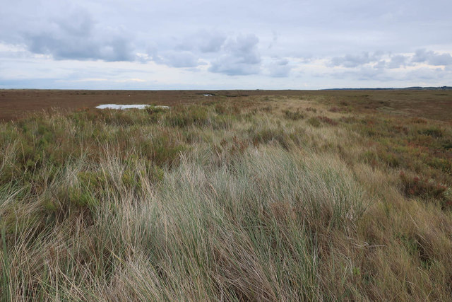 Grass ridge into the saltmarsh