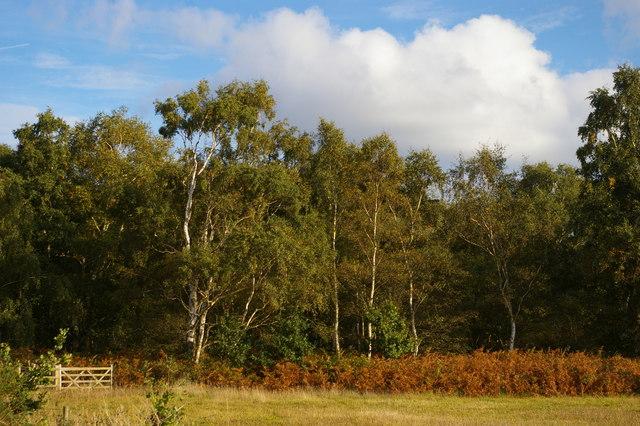 Woodland at Snape Warren