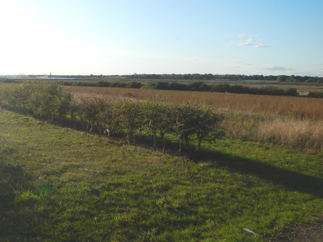 New Hedgerow