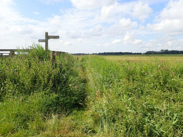 Signpost on Halvergate Marshes
