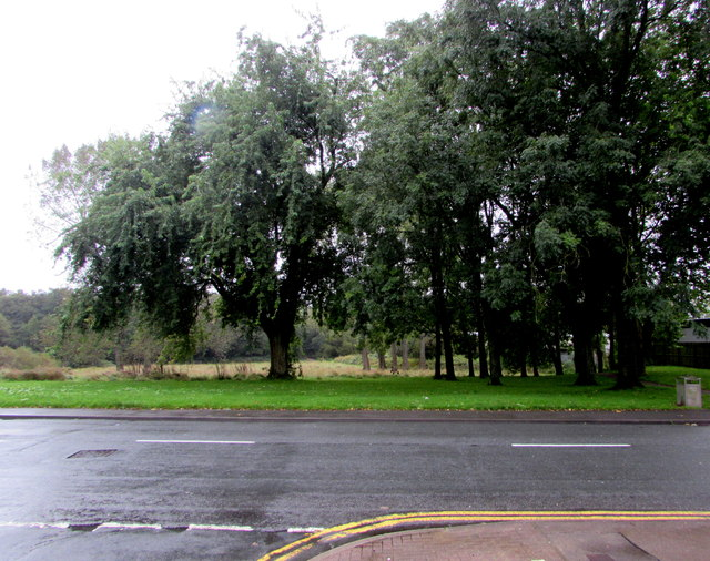 Trees on the south side of Newport Road, Trethomas