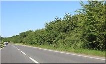 SP9059 : The Bozeat Bypass by David Howard