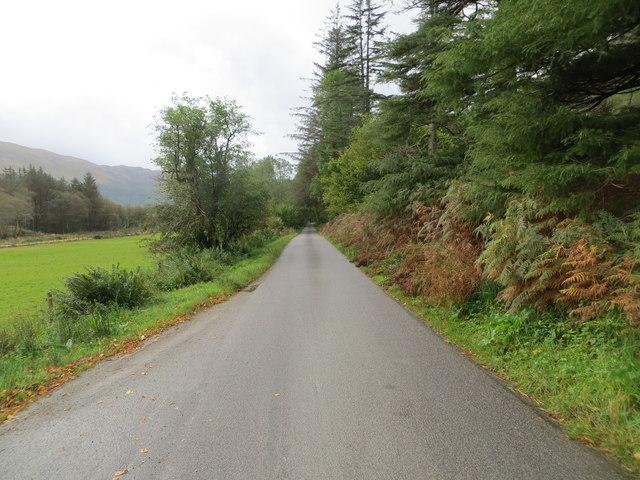 Tree-lined road near to Glasdrum Farm