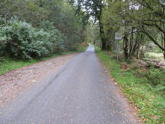Tree-lined road approaching Fasnacloich